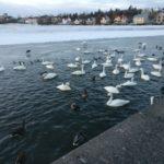 Birds at pond