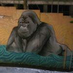 Reykjavik street art of gorilla
