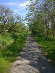 Formonthills Wooodland (With Deer)