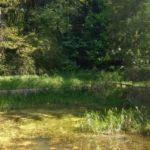 Balgonie Park pond
