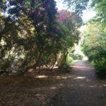Balgonie Park rhododendron