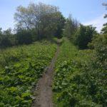 Narrow Farm Path