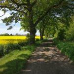 Path to thornton
