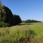 Farmland behind Leslie