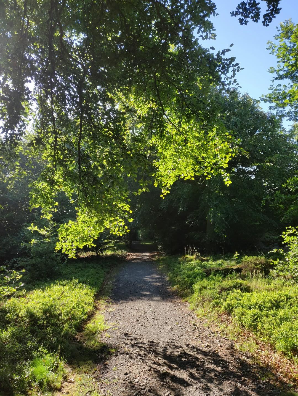 Woodland on Descent